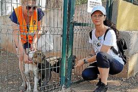 Denuncian a la perrera de Son Reus por permitir el maltrato de los animales