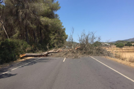Tráfico cortado en la carretera de Sant Joan por la caída de un pino