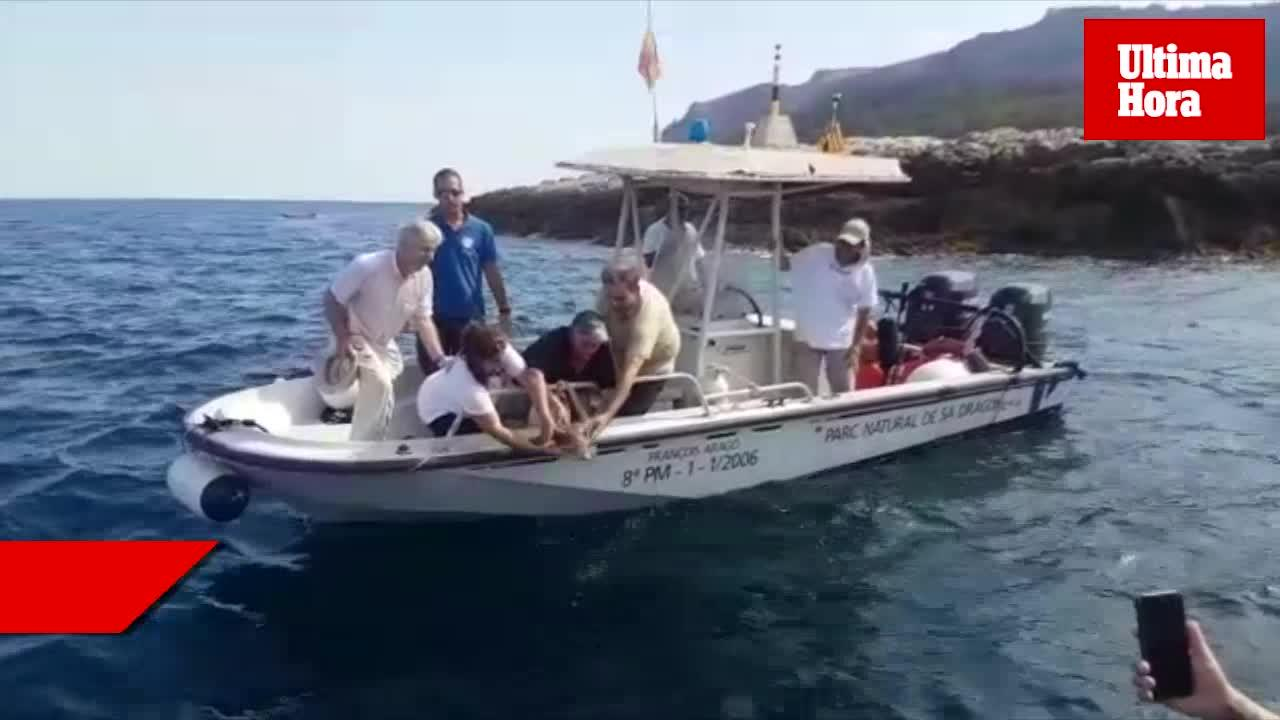 Liberan una tortuga marina en el Parc Natural de sa Dragonera