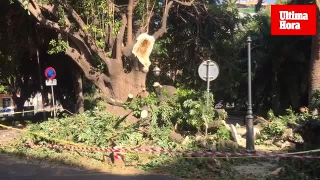 La rama de un árbol provoca heridas leves en un conductor