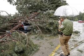 Seis heridos al caer una rama de árbol en la Universidad de Navarra