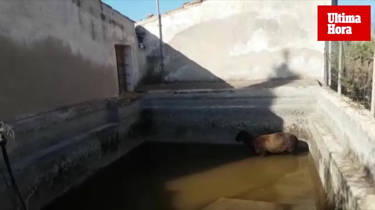 Rescatan un cordero atrapado en un aljibe en el Port d'Andratx