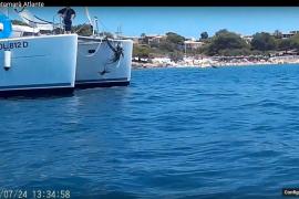 Salvem Portocolom denuncia a un velero y a un catamarán tras arrancar posidonia