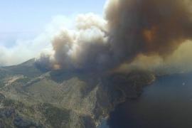 La cobertura forestal llega al 60 % en la zona afectada por el gran incendio de 2013 en Andratx