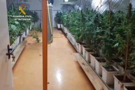 Tres detenidos por cultivar marihuana en una nave industrial de Llucmajor