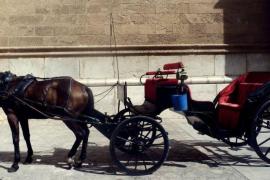 Las galeras no circularán por Palma cuando haya mucho calor