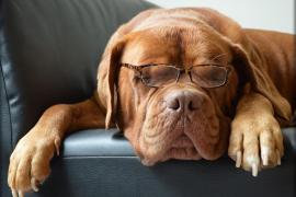 La perra que ha aprendido catalán en 10 días revoluciona Twitter