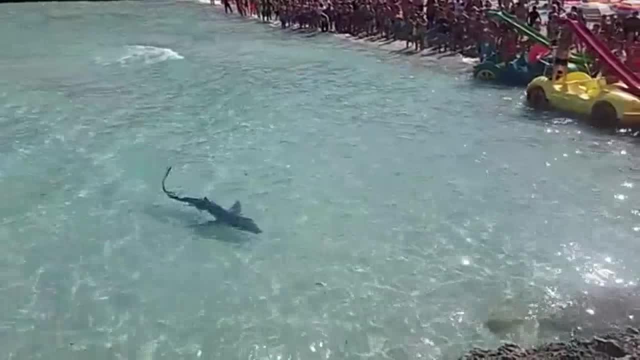 Avistado un tiburón en la playa de Calas de Mallorca, que ha tenido que ser cerrada