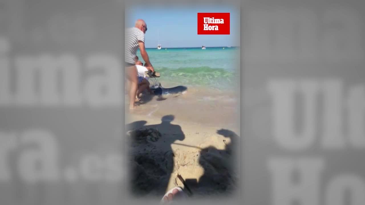 Muere el tiburón avistado en Calas de Mallorca