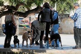 La policía inspecciona los parques de Palma a la 'caza' de perros ilegales de raza peligrosa