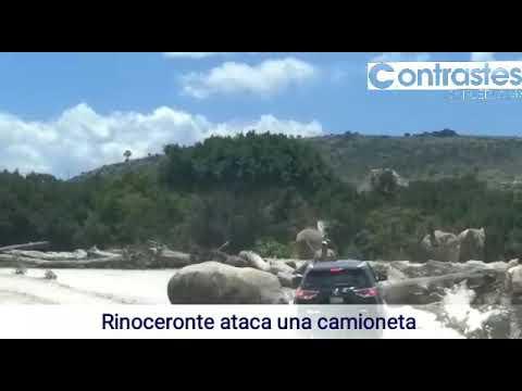Un rinoceronte embiste un vehículo en un safari zoo
