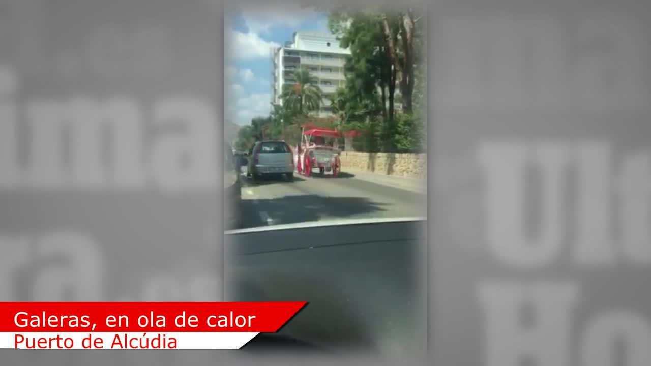Denuncian la circulación de galeras en el Puerto de Alcúdia en plena ola de calor