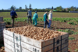 La ley agraria impedirá construir en rústico en sa Pobla y gran parte de Campos y Palma