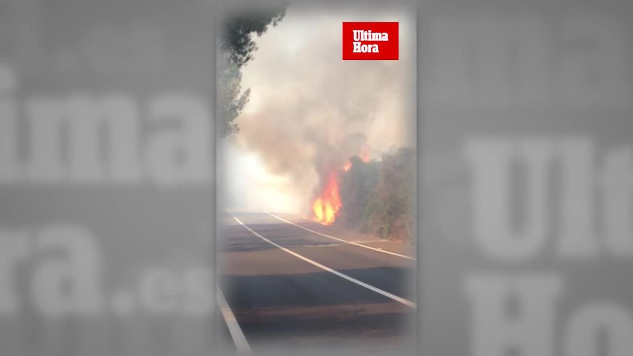 Declarado un incendio en Calas de Mallorca