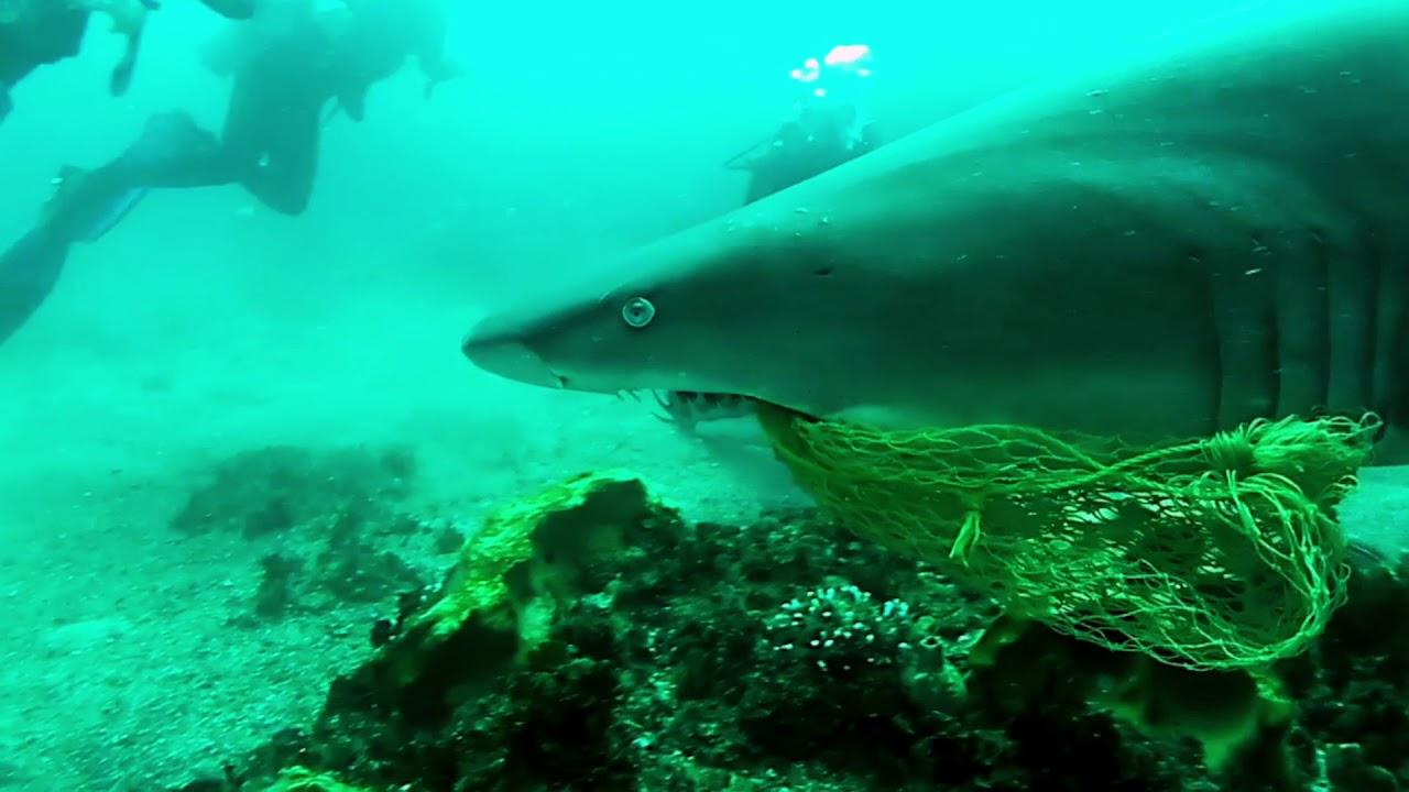 Un buceador español salva a un tiburón de una muerte lenta y dolorosa