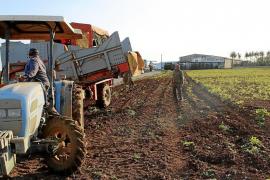 Los agricultores deberán comprar plazas turísticas para poder ofrecer agroestancias