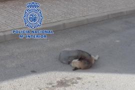 Detenido por matar a su perro con un atropello intencionado para que no sufriera