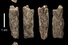 Hallan el primer humano descendiente directo de dos especies distintas