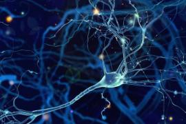 Descubierto un nuevo tipo de célula cerebral humana