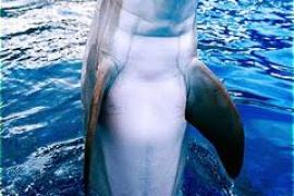 Un delfín excitado obliga a cerrar una playa en Francia