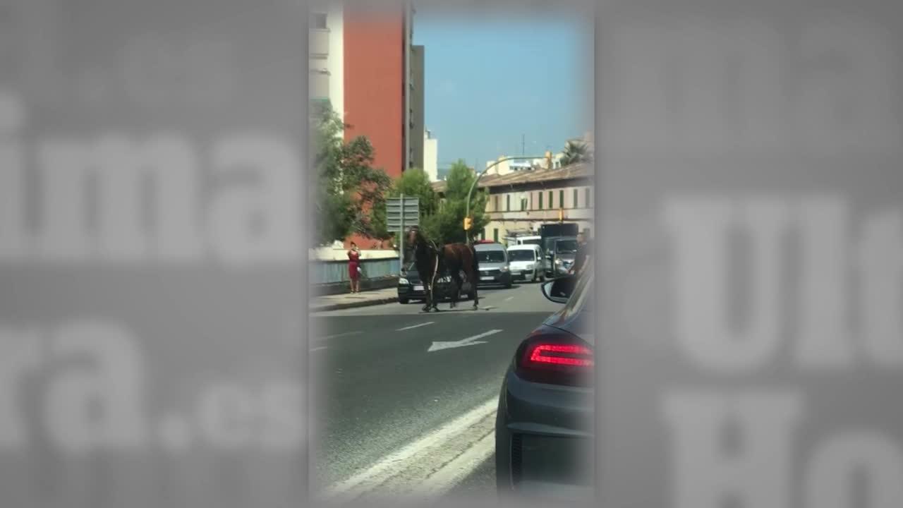 Un caballo desbocado paraliza el tráfico en Can Blau