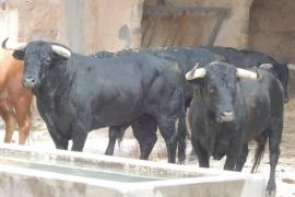 Fallece un joven corneado por un toro