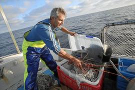La temporada de la pesca de langosta concluye con un incremento de 4,5 toneladas