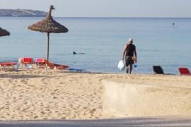 Avistamiento de delfines en Can Pastilla