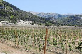 Un inversor inglés compra Gabellí Gran para abrir un hotel de cinco estrellas con viñedos