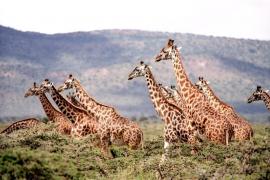 Una jirafa aplasta y hiere de gravedad a una mujer y a su hijo en Sudáfrica