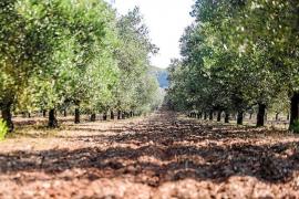 Las reservas hídricas se sitúan por debajo del 50% en Ibiza y la sitúan en un nivel de prealerta por sequía