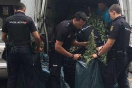 El olor delató a una furgoneta llena de marihuana en Palma