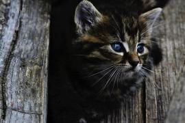 Un vecino, obligado a pagar 115 euros por el rescate de un gato que no era suyo