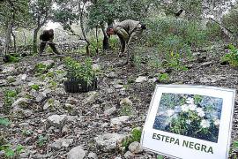 Los talleres de ocupación del Ibanat plantan el futuro de bosques y trabajadores