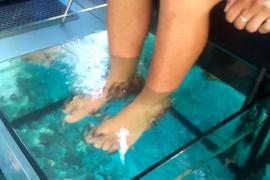 Una mujer pierde los dedos de un pie por una pedicura con peces