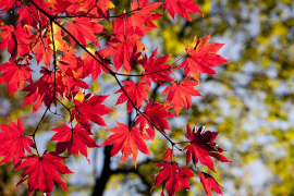El otoño comienza este domingo