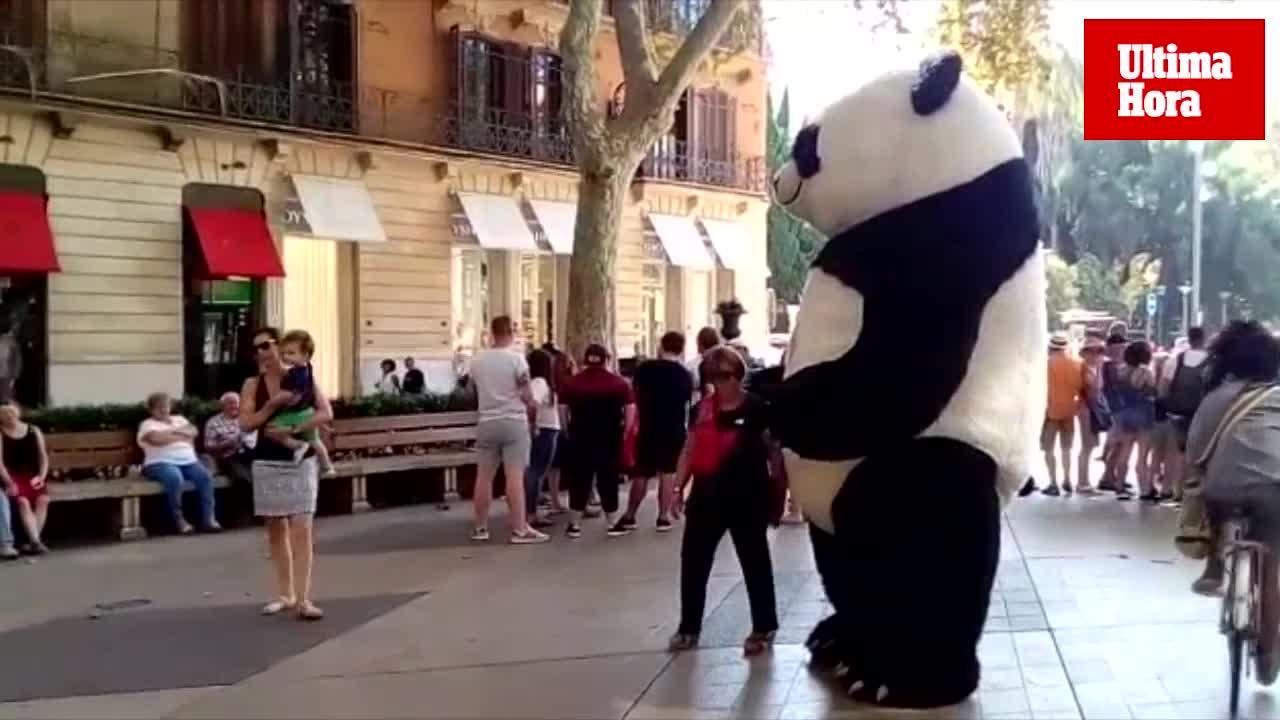Los pandas 'invaden' Palma