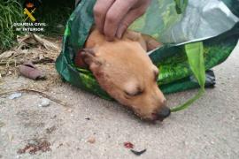 Detenido por maltratar a un perro y tirarlo a un contenedor de basura Palma