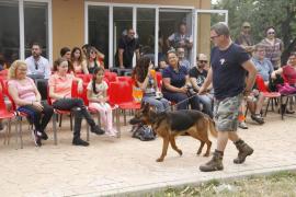 La asociación Peluditos de Son Reus organiza un desfile de perros para este sábado