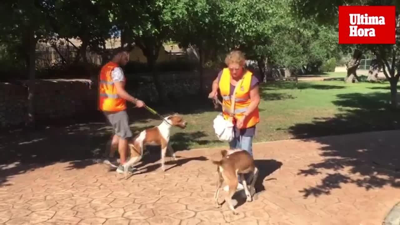 Desfile de perros adultos en Son Reus para reclamar un hogar