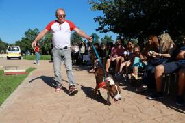Más de 30 perros han desfilado en Son Reus para encontrar un nuevo hogar