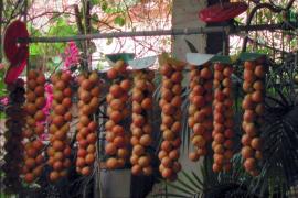 Incluyen el tomate 'de ramellet' en el catálogo de alimentos tradicionales de Baleares