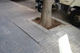 Acera levantada por un árbol