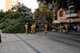 Dos personas heridas por la caída de un árbol en Palma