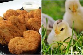¿Cómo hacer 'nuggets' de pollo sin matar al pollo?