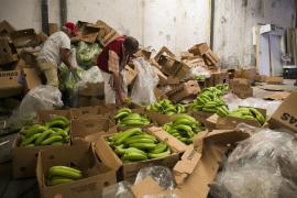Incautan en Málaga más de cinco toneladas de cocaína ocultas en bananas