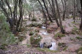 Bosque encantado en Es Freu