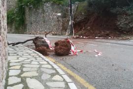 Más de 100 incidentes en Mallorca por las lluvias