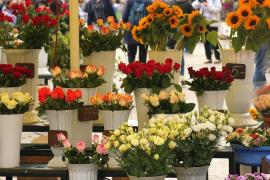 Pimem prevé una campaña «catastrófica» de Todos los Santos para las floristerías