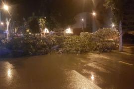 El fuerte viento y las lluvias dejan su huella en Ibiza